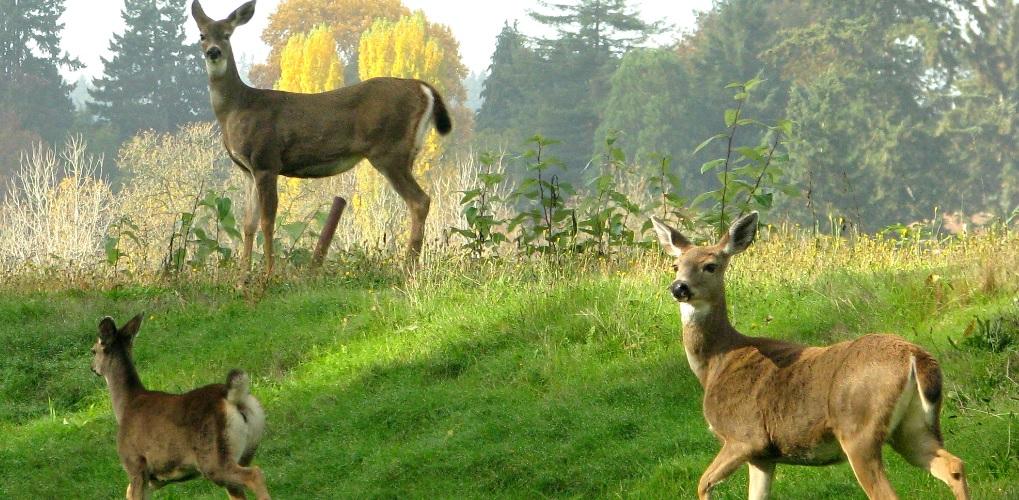 El Otoño y la Berrea en Asturias con GO Rentacar